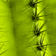 cactus-destacada
